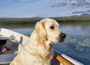 ... och att åka roddbåt