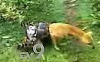 Cão foge de abraço mortal de píton