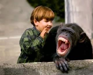 foto monyet ketawa - gambar binatang - foto monyet ketawa
