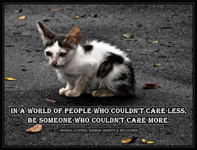 Image result for caring for animal quotes