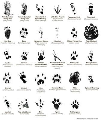 Animal Paw Print Identification