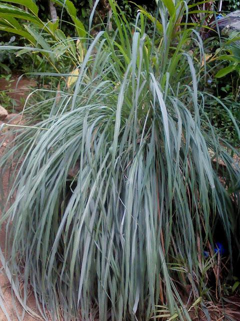 kandy ranweli spice garden