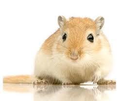 Animais de estimação exóticos pequenos