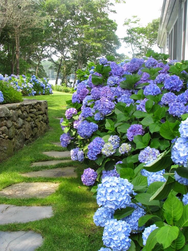 flores para jardim verao : flores para jardim verao:Um jardim para cuidar: Flores que não podem faltar no seu jardim no