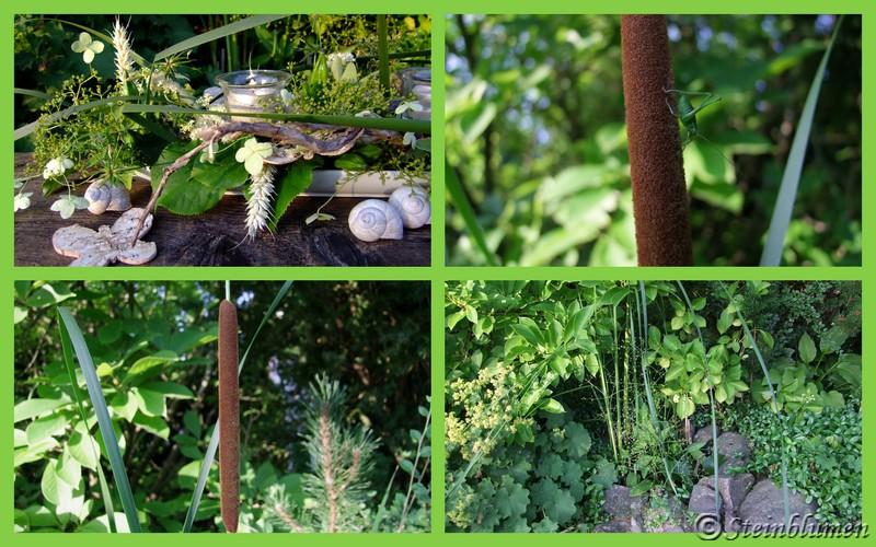 Schilfkolben Garten