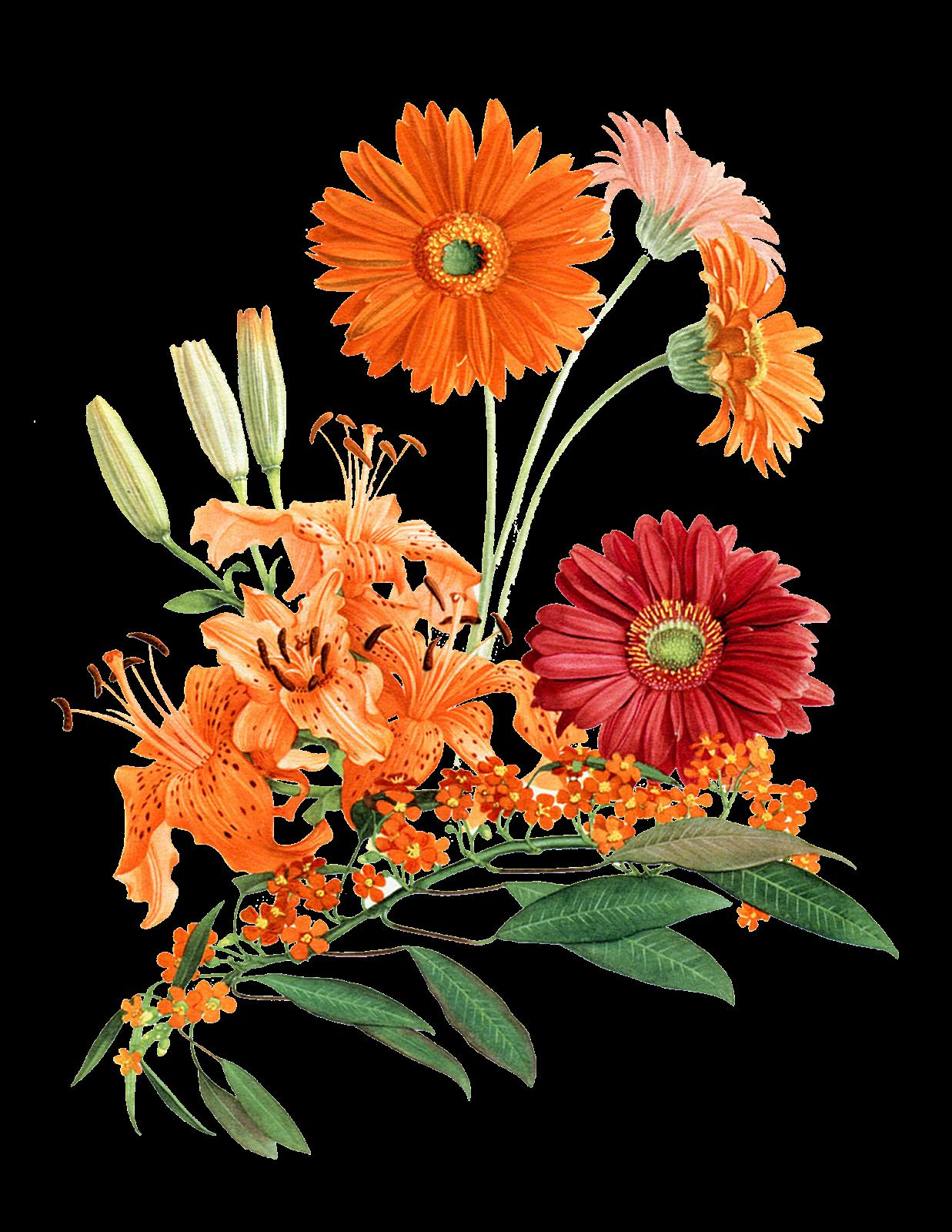 MABON  u0026 VERDANT   Aromatic Muse Botanical Perfume   September 2015   Calendula Flowers, Tomato