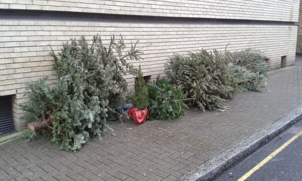 Abandoned Christmas Trees in London