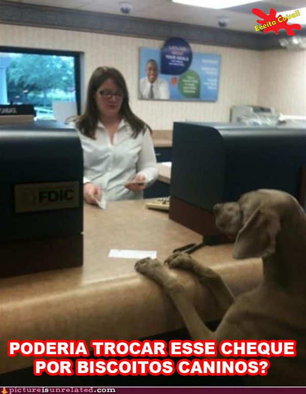 cachorro, banco, cheque, biscoitos caninos, eeeita coisa