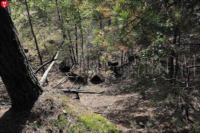 военный или индустриальный объект в лесу