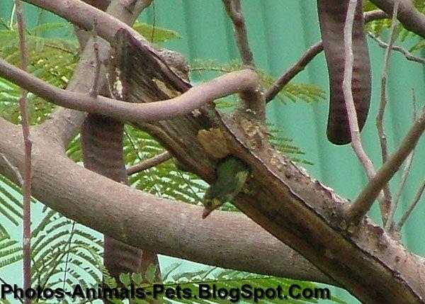 http://2.bp.blogspot.com/-hmPZJFWH4js/Tet3igqywEI/AAAAAAAABQI/QxYvCtUF55c/s1600/woodpeckers_0005.JPG