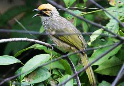 http://2.bp.blogspot.com/-hmfLIAFvjRM/UJK4wd6HeaI/AAAAAAAABNM/H75cWOL9zBg/s1600/Burung+Cucak+Rawa.jpg