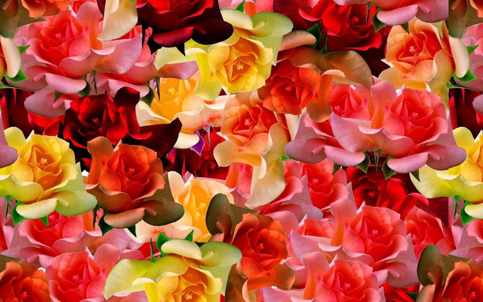 Acodero images des roses et rien que des roses for Parterre de roses photos