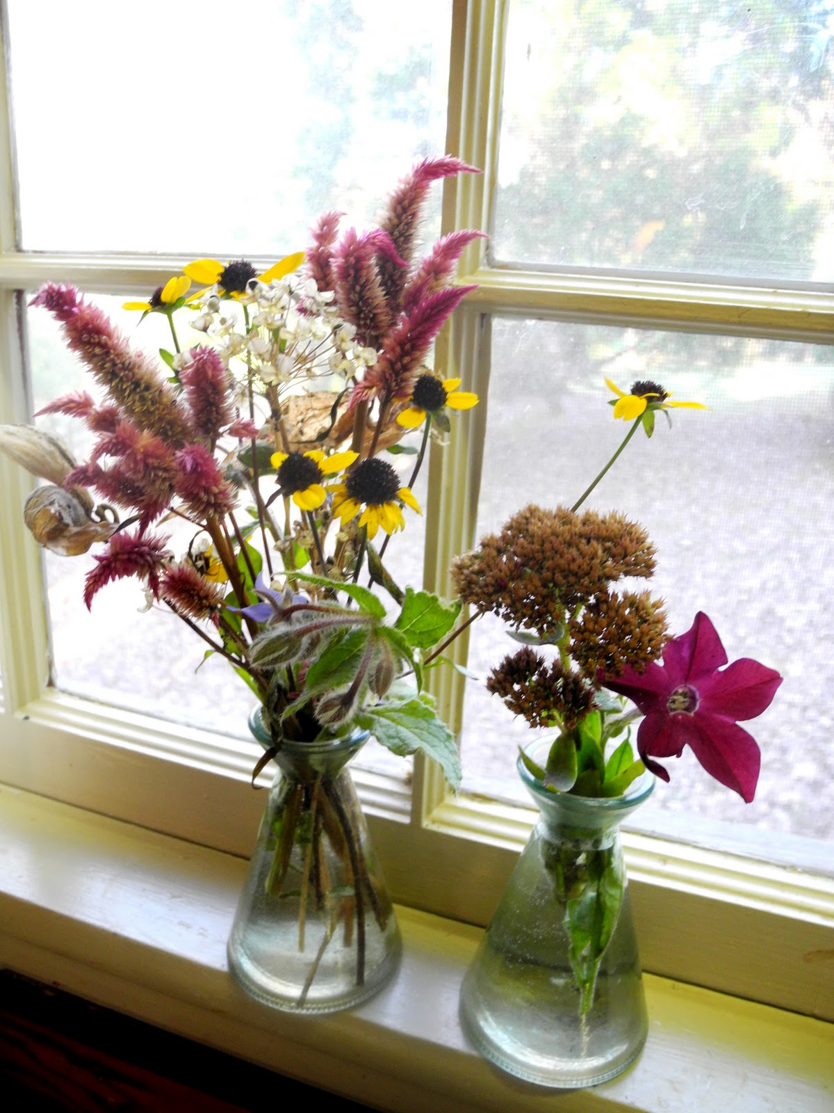 Windowsill Arranging November 6 2011
