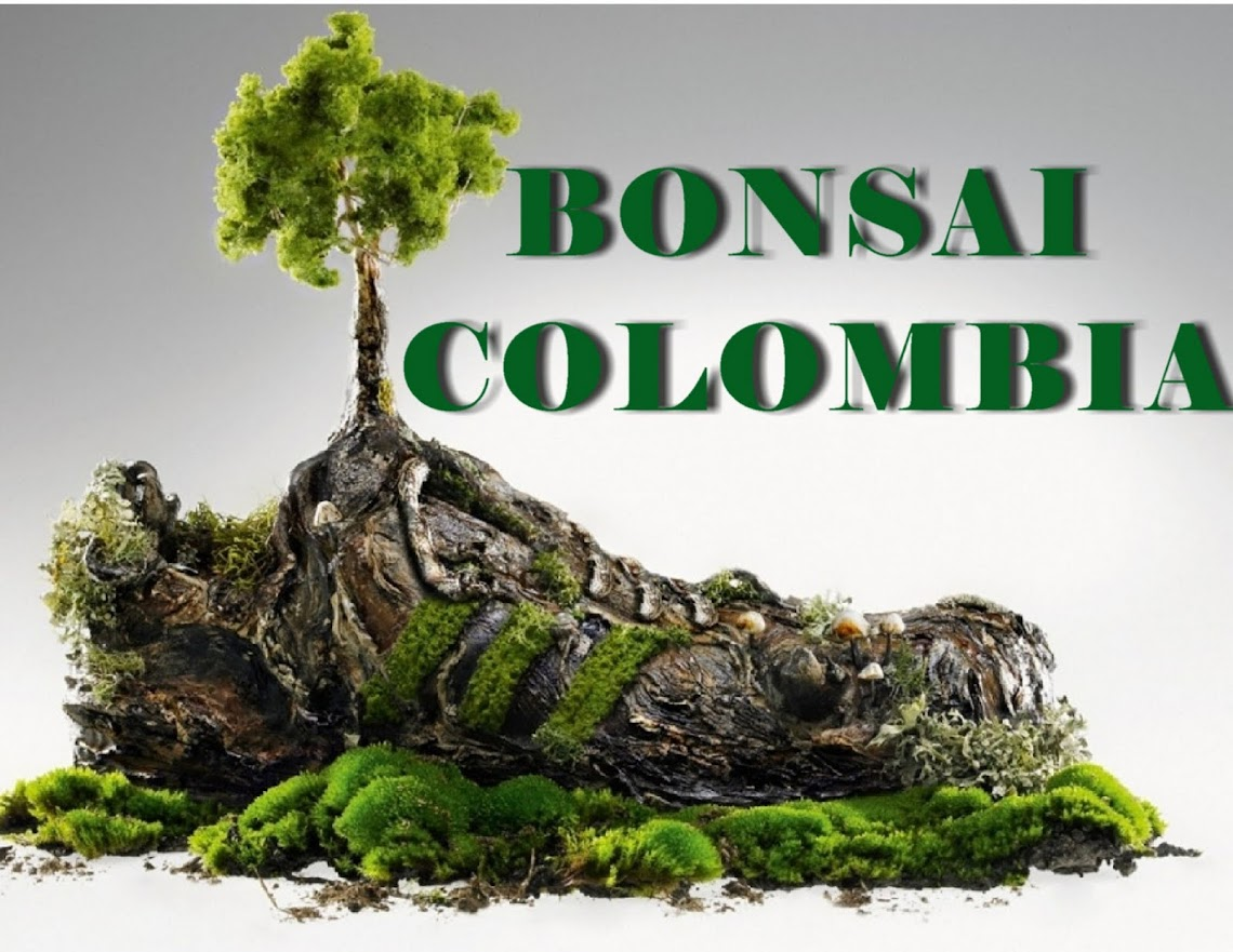 BONSAI COLOMBIA