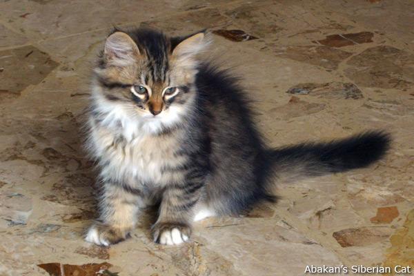 Cute Pussy Cat 27