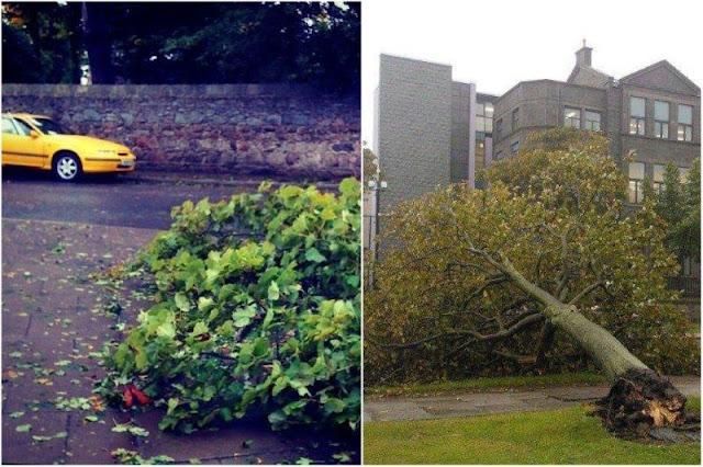 Arboles caidos, ramas rotas y hojas en Aberdeen tras temporal
