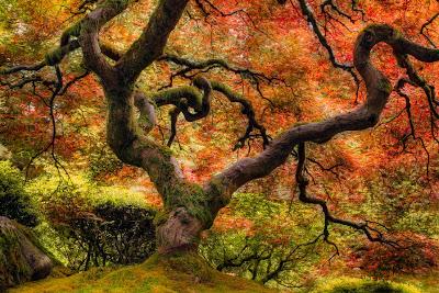 Un hermoso y frondoso maple junto al lago de aguas cristalinas