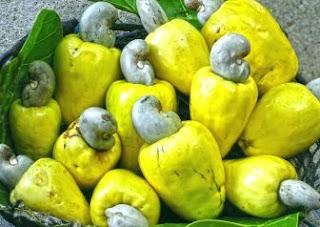 alamat ng Kasoy Cashew Legend Mga Alamat ng Pilipinas Philippine Legends