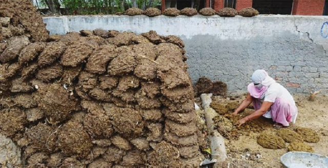 Kotoran Sapi Dijual Online dan Laris Manis di India