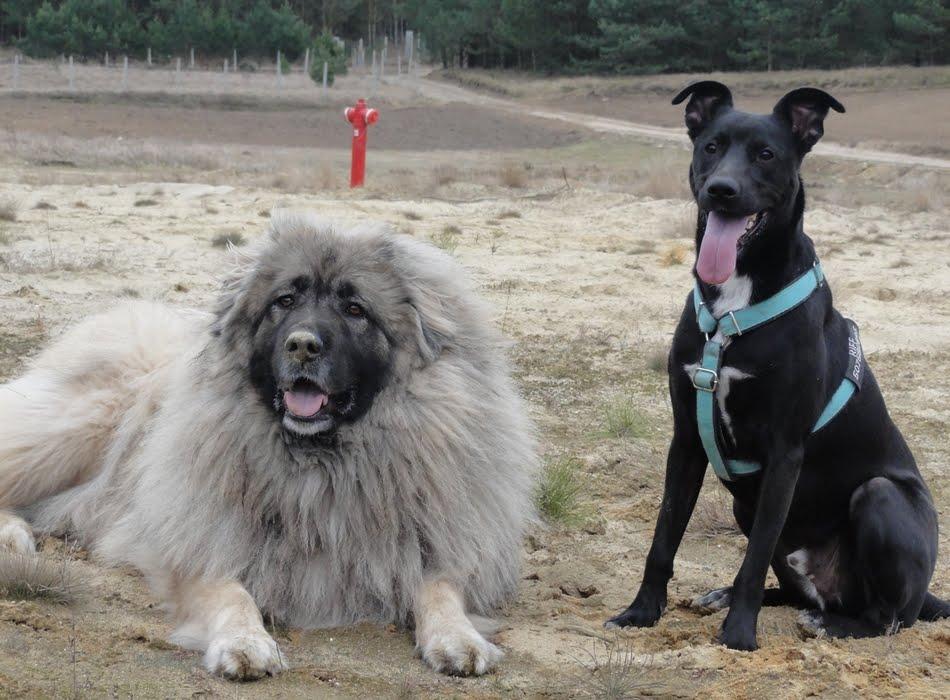 Mad Paws - czyli jak żyć z nadreaktywnym psem