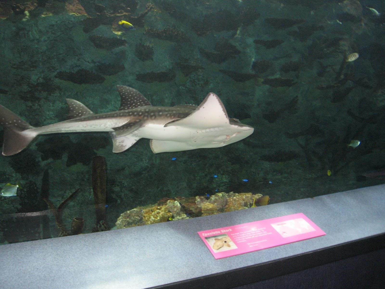 Lyinn 39 S Blog Newport Aquarium And 40th Birthday