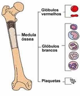 leucemia animal: