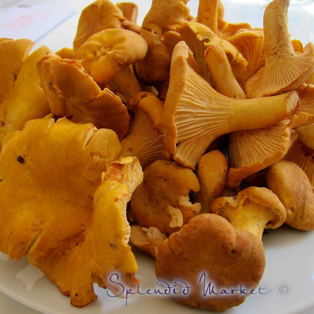 These Chanterelles were the most perfect, pristine specimens I have ...