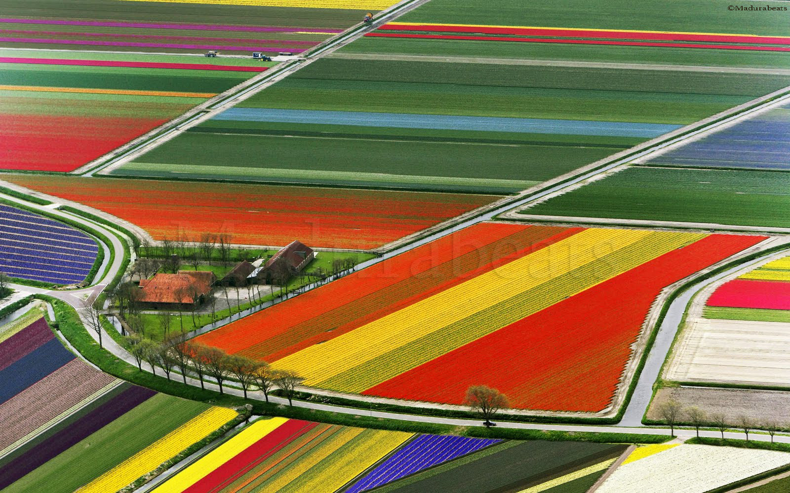 Top+View+of+Tulip+Flower+Fields-Amsterdam-The+Netherlands,Holland,Tulips