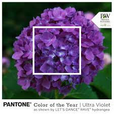 Plant a Pantone 2018 Color of the Year - Ultra Violet!