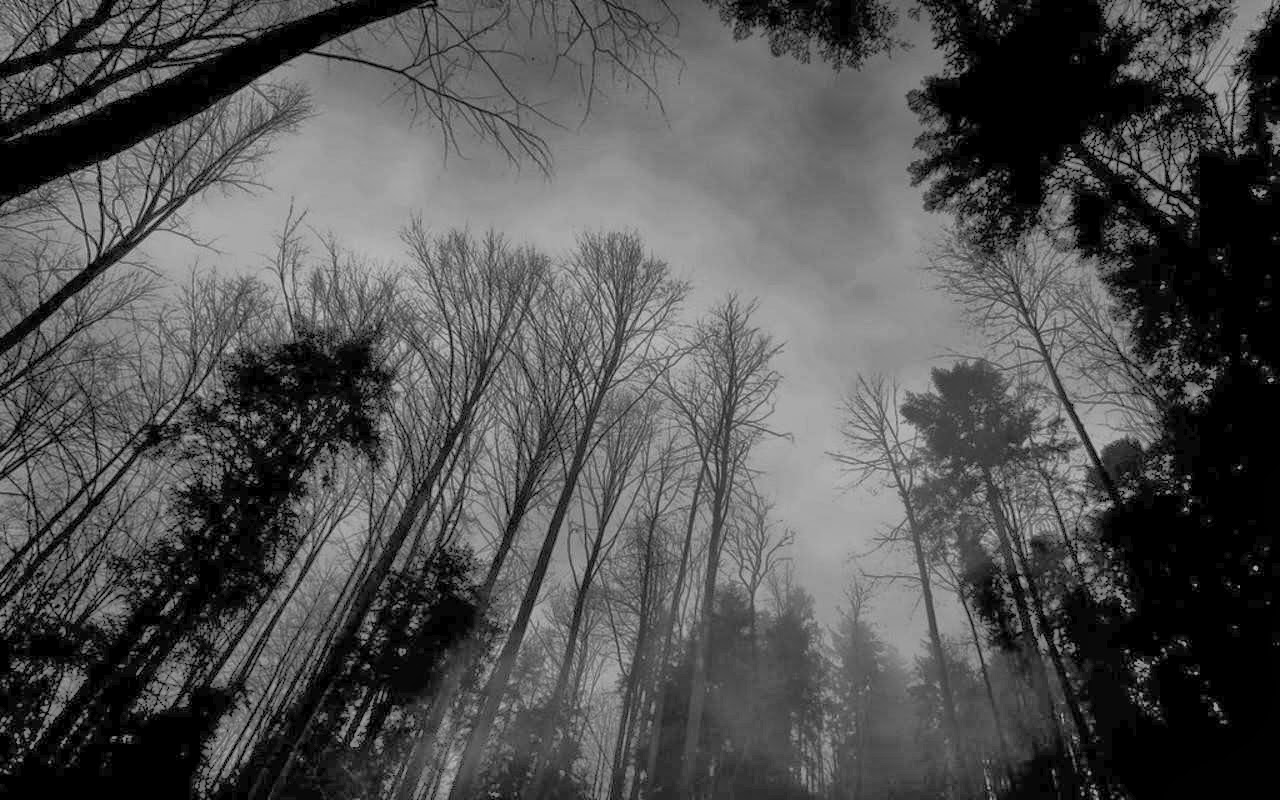 Forest wallpaper black and white for Black and white tree wallpaper mural