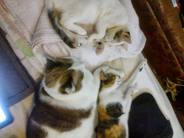 sleepy cats..