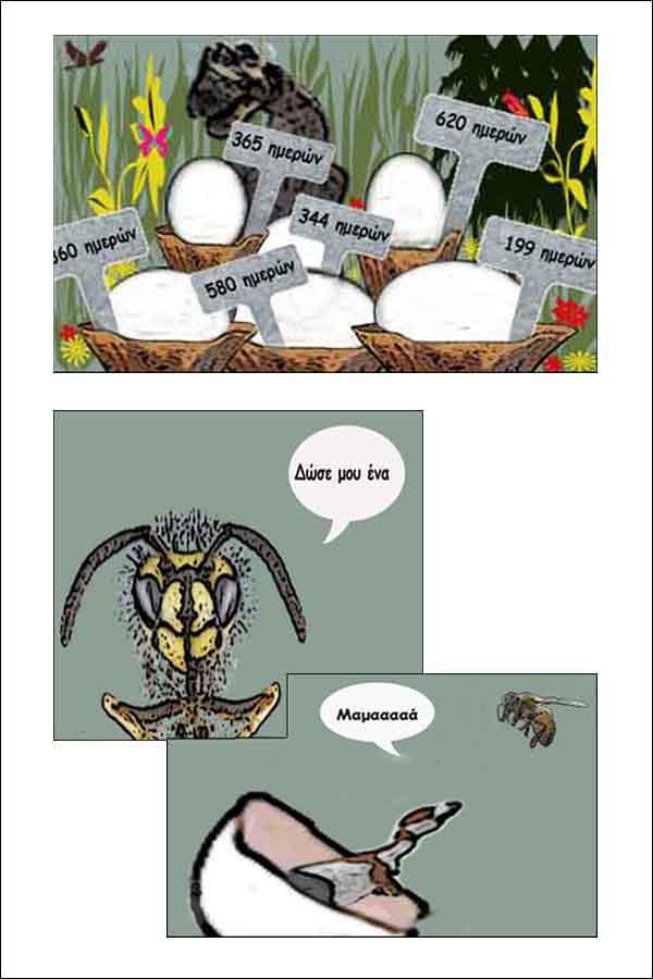 Αυγά δεινόσαυρου