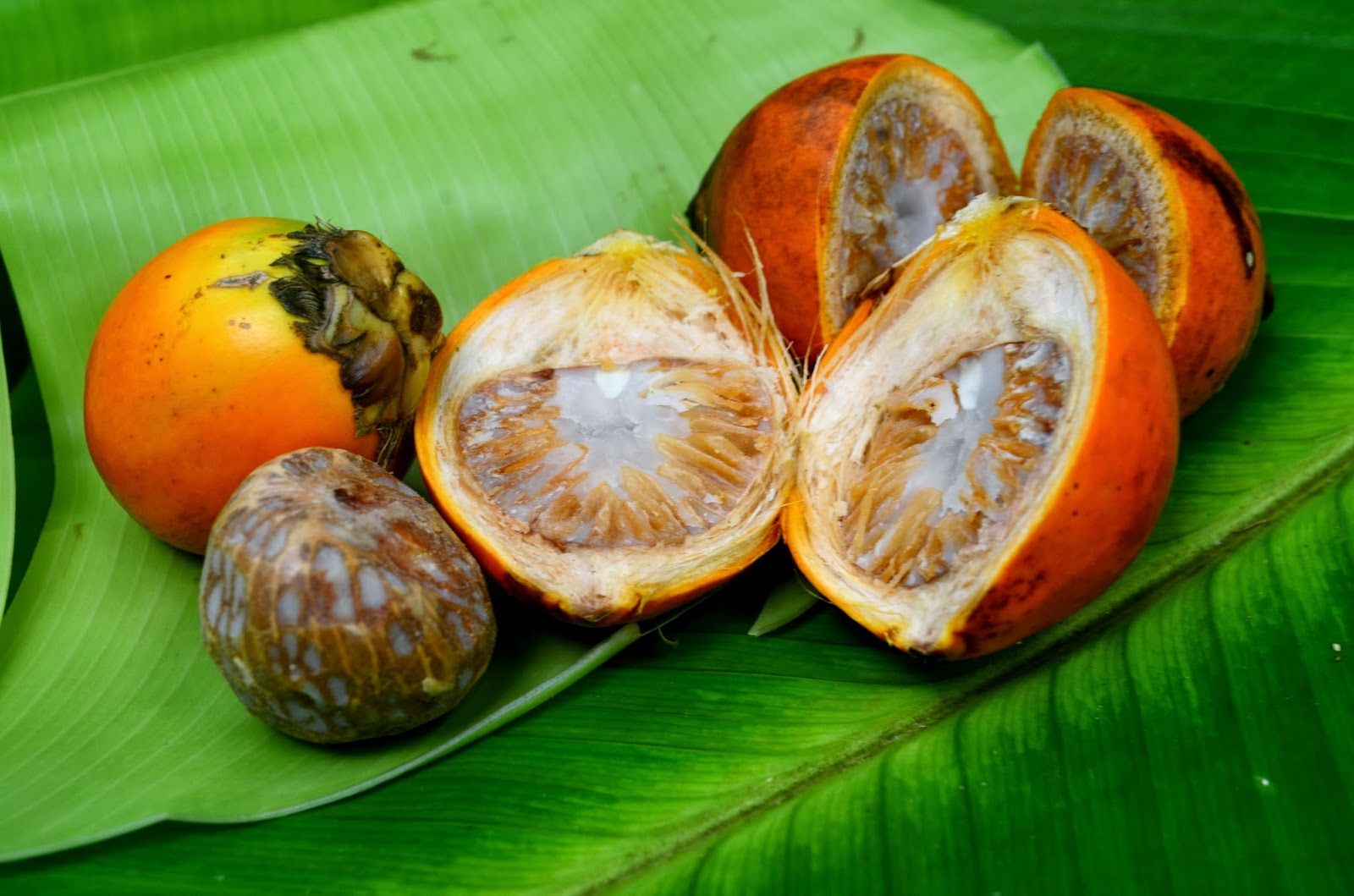 betel nut Betel nuts, areca catechu are the nut which supports for antioxidant, antihelmintic, sedative, antidepressant, antioxidant and astringent activity.