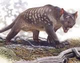 Thylacoleo carnifex (carnivorous marsupial lion)