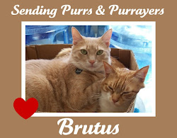 Purrs for Brutus