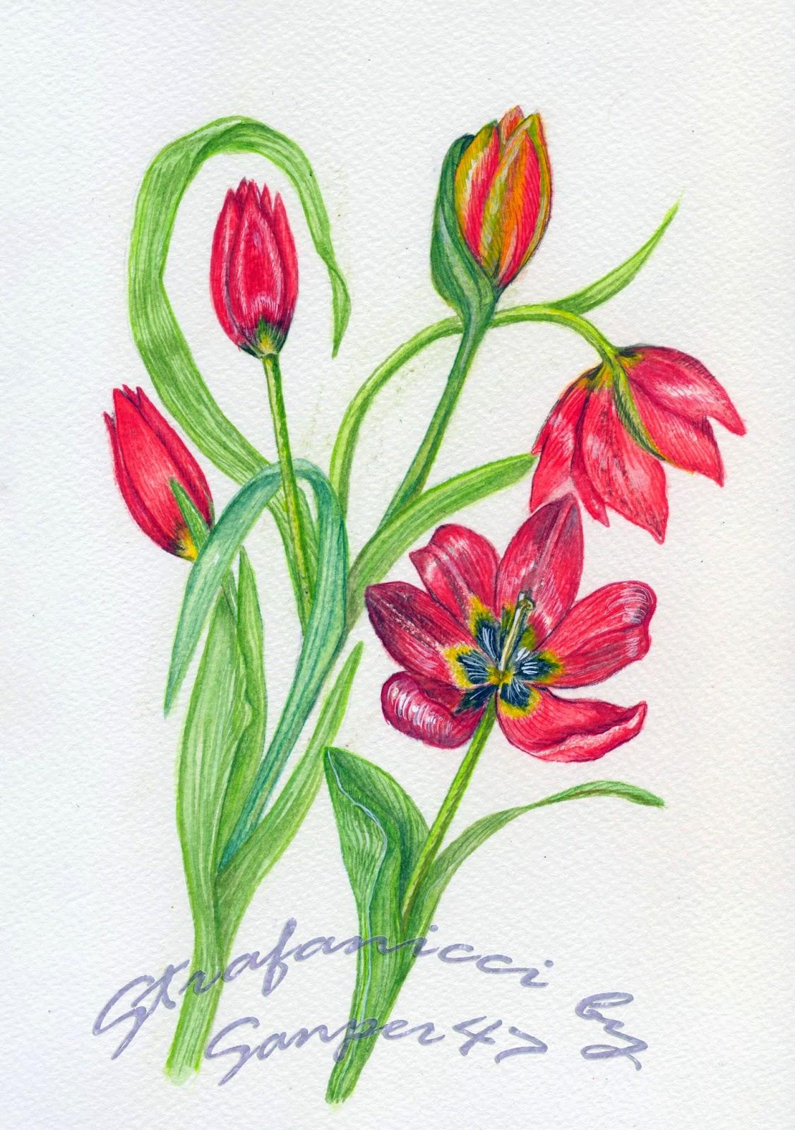 Strafanicci marzo 2014 for Fiori da disegnare facili