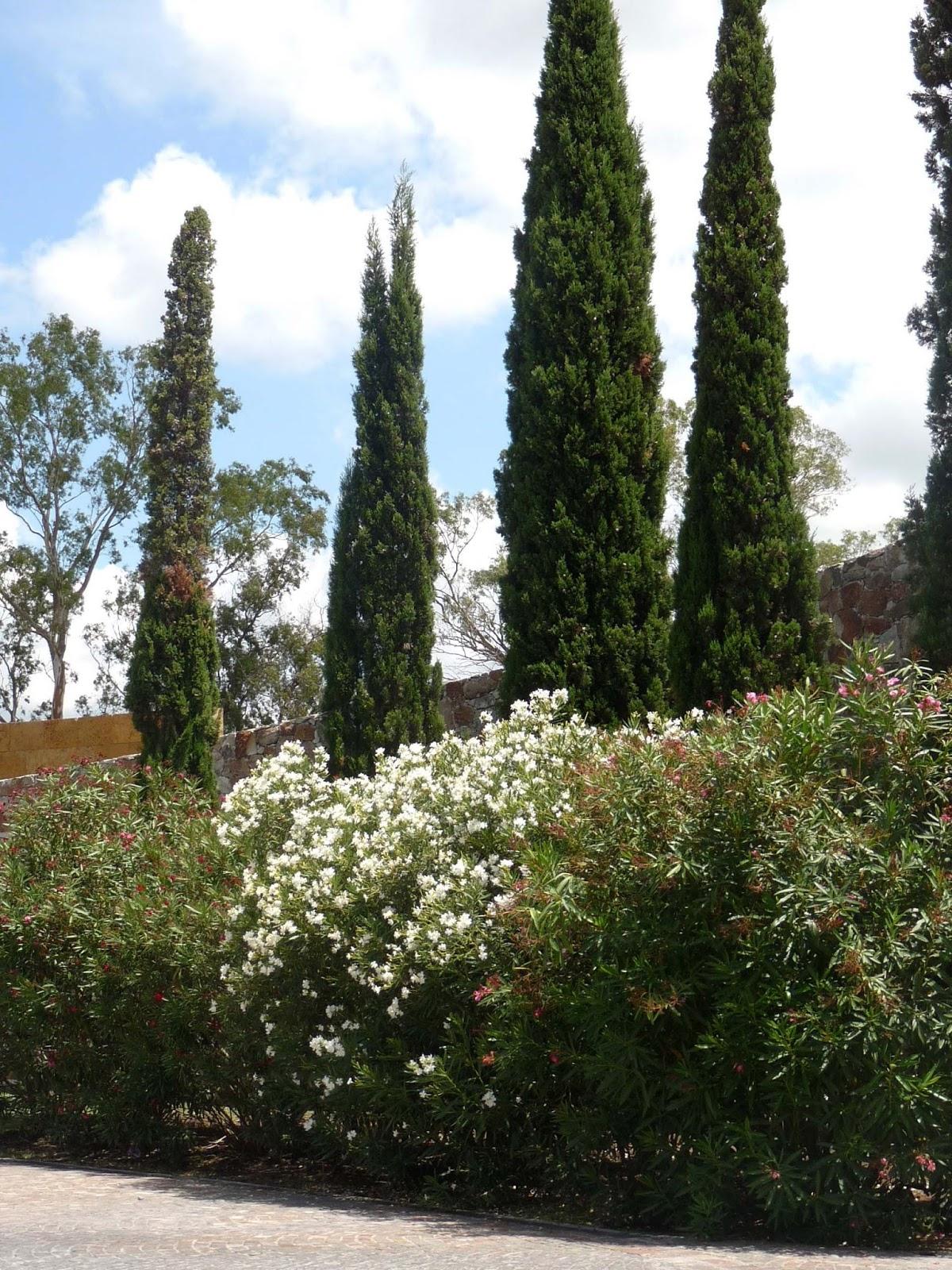 En el jardin con feras perennes for Jardin cipres