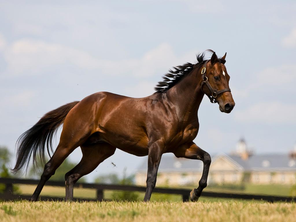 Thoroughbred Horses Running