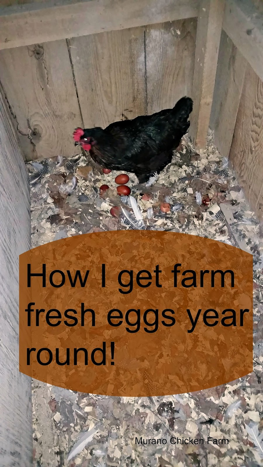Farm fresh eggs year round