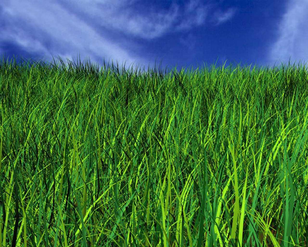 http://2.bp.blogspot.com/-hr3juH1z628/TvFkpQWtL1I/AAAAAAAAAFc/kPoFUV4IOS4/s1600/green-graas-blue-sky.jpg