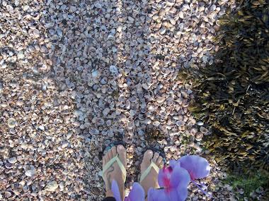 pés conchas e orquídeas