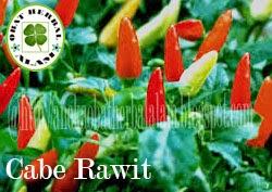 khasiat, manfaat, kegunaan, obat, herbal, daun cabe rawit, masuk angin, sakit perut