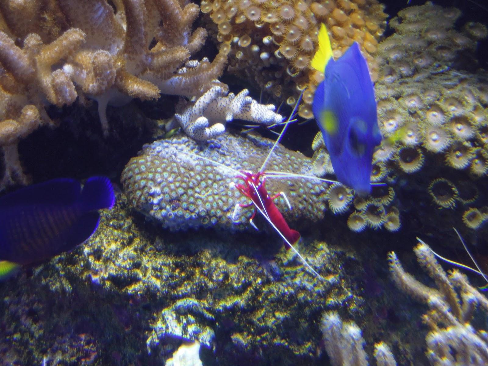 My Miniature Kaleidoscope Sea Aquarium Ocean Restaurant