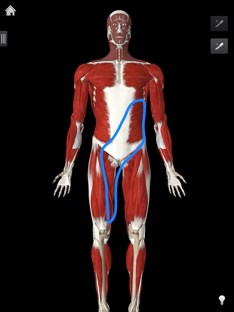 Anterior Oblique System Osr Physical Therapy