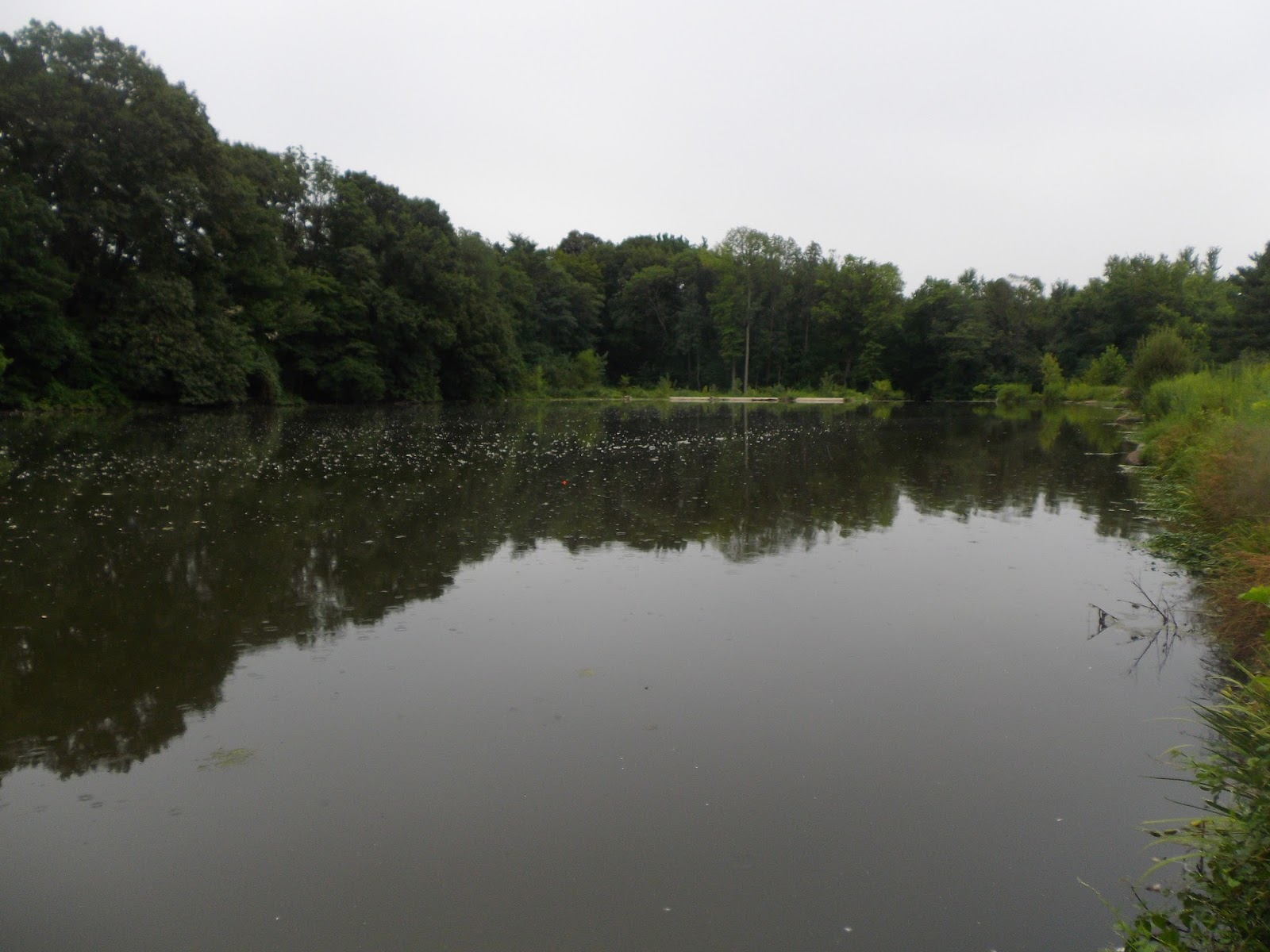 Clarks Pond Fly Fishing The Great Lakes Of Nyc