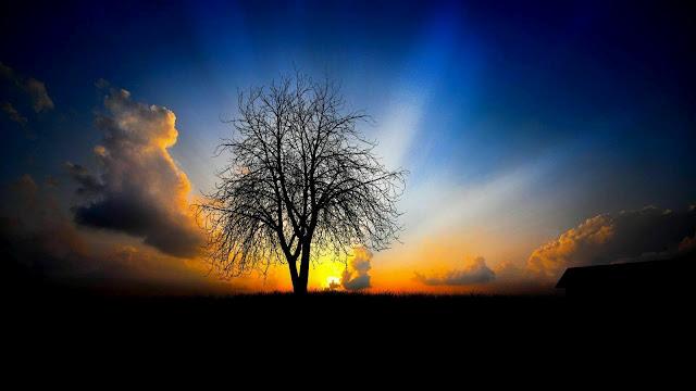 http://2.bp.blogspot.com/-hrvb6DgDjU4/Tymkl8n9juI/AAAAAAAAFuY/Y70wMFido2E/s640/Maisqtop-Natureza+(2).jpg