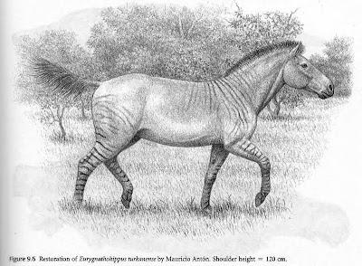 caballos prehistoricos Eurygnathohippus