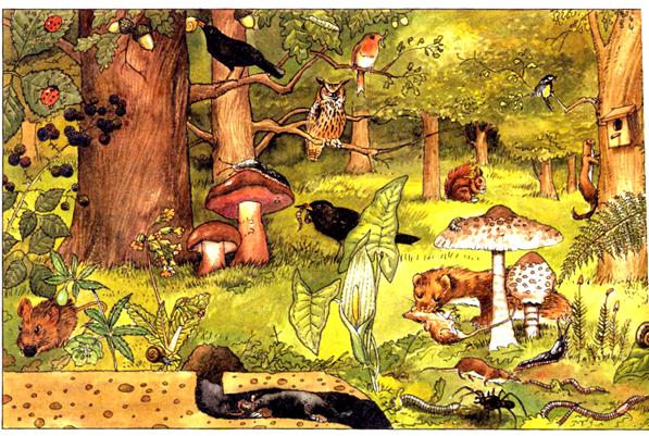 Cuarto curso define qu es un ecosistema for Porque son importantes los arboles wikipedia