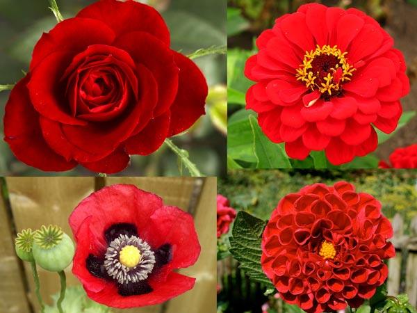 Clip Art Flower Garden