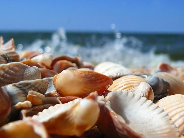 Tesoros del Mar